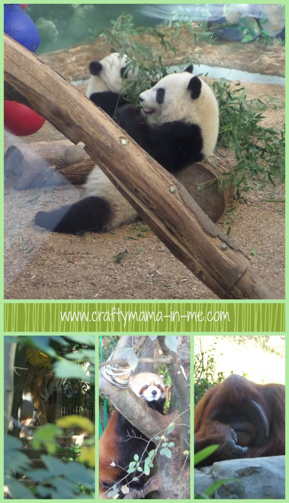 Our Zoo Atlanta Visit and Review