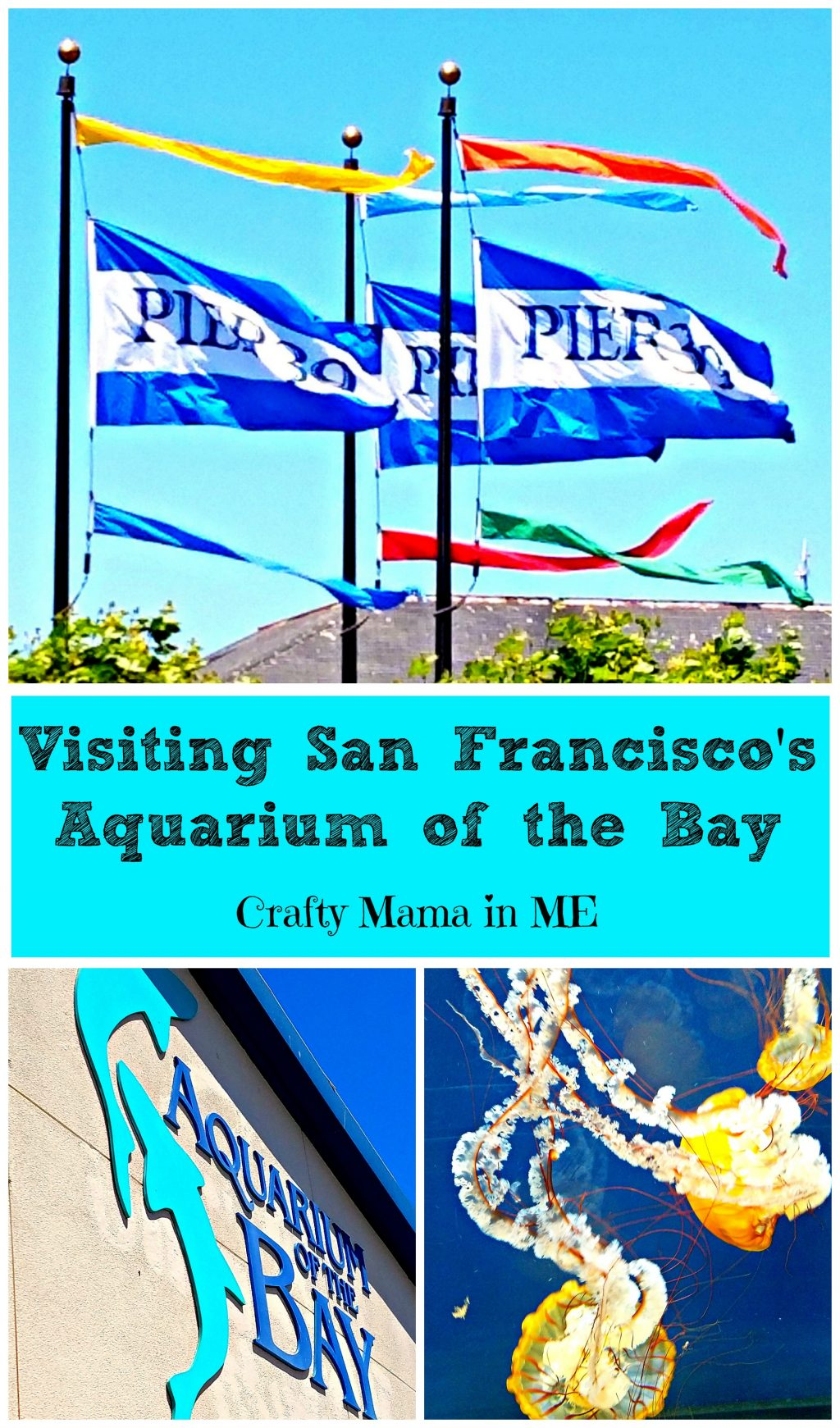 Visiting San Francisco's Aquarium of the Bay