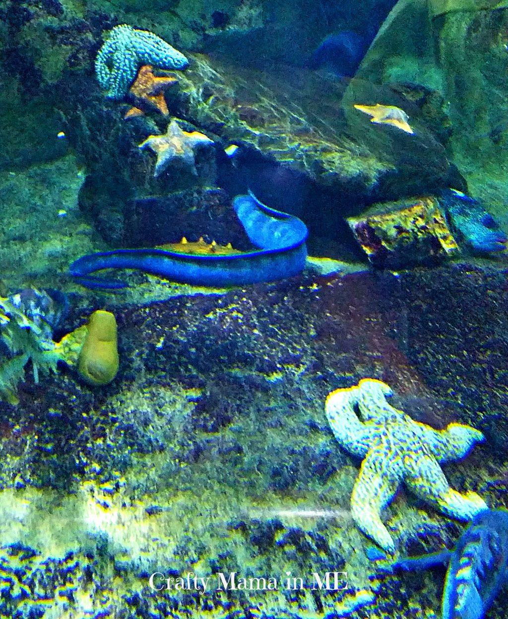 Visiting San Francisco 39 S Aquarium Of The Bay Crafty Mama