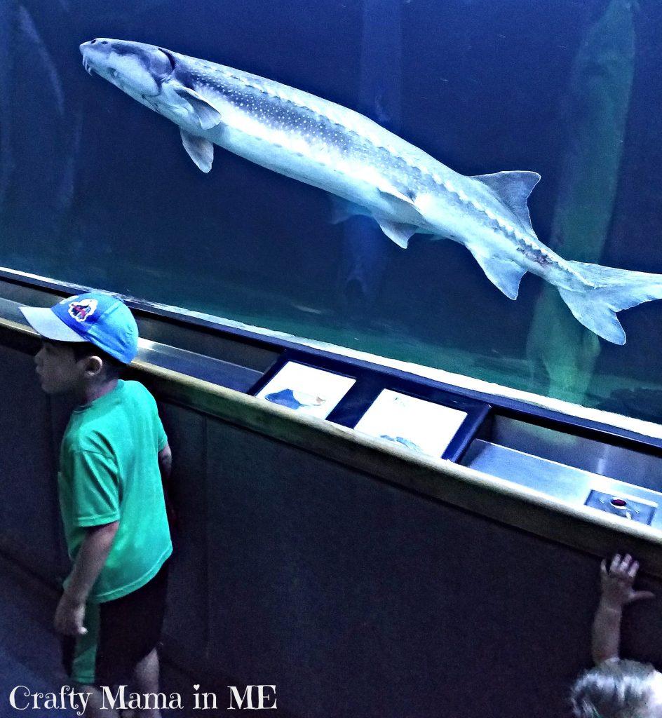 Visiting San Francisco's Aquarium of the Bay